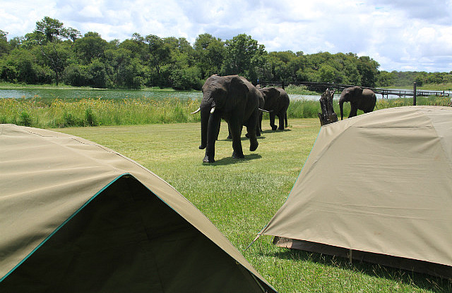 1.1327430480.elephants-at-camp