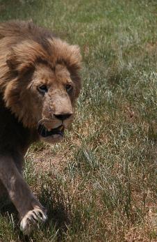 1.1327430480.lions