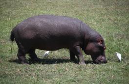 1.1327604237.1-hippo