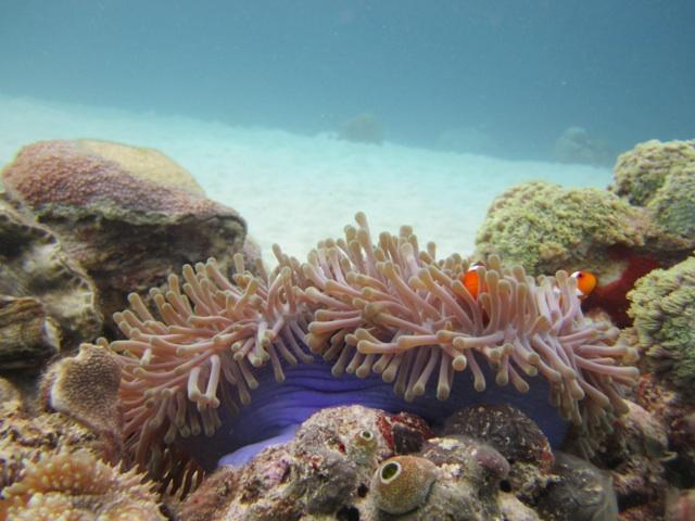 1.1329475262.clown-fish