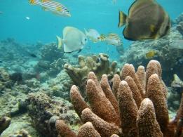 1.1329560409.reef