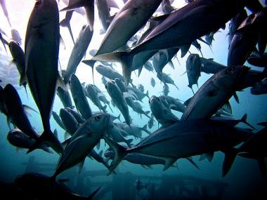 1.1342697101.jackfish