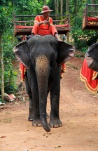 1.1344284730.elephant-rides