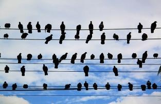 1.1348439442.pigeons