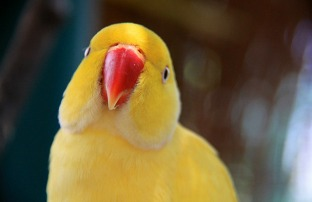 1.1354300988.bird-park