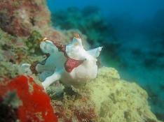 1.1353906987.1-frogfish