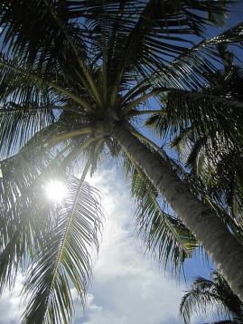 1.1353906987.1-palm