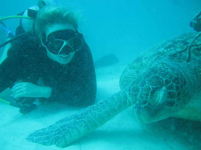 1.1353906987.turtle