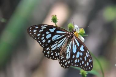 1.1359723644.butterfly