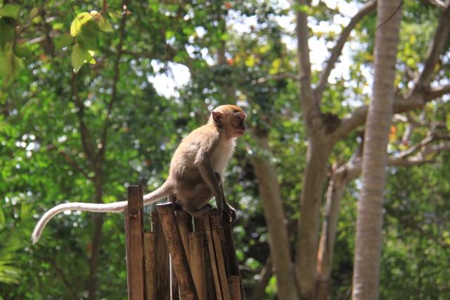 1.1360410488.monkey