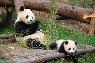 1.1362814429.cute-pandas