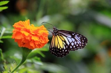 1.1364688000.pretty-butterflies