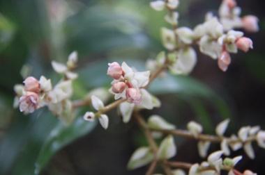 1.1364688000.wild-orchids
