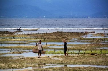 1.1365379200.seaweed-farming