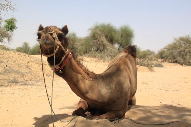 1.1366156800.1-camel