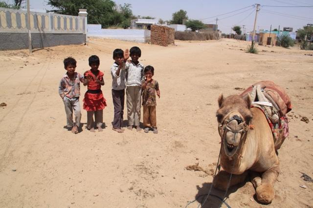 1.1366156800.camel