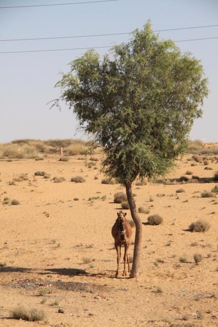 1.1366156800.hanging-in-the-desert