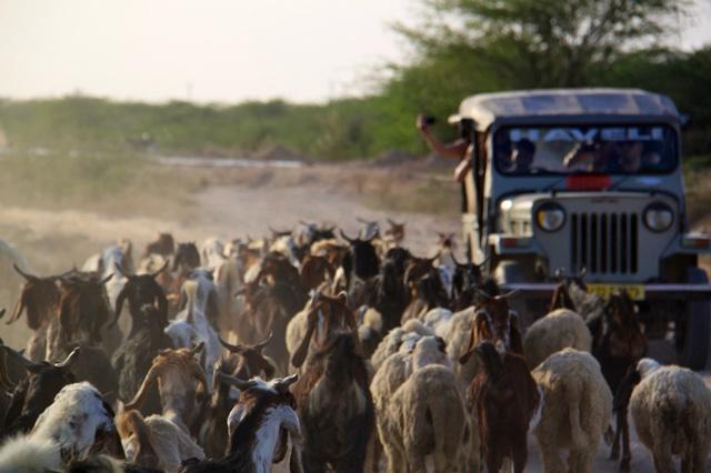 1.1366524597.goats