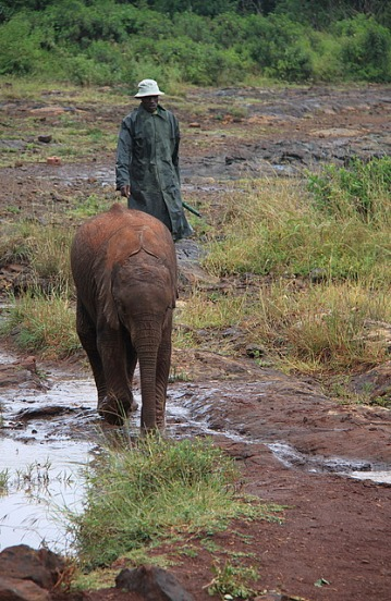 1.1325773527.2-sheldricks-elephants