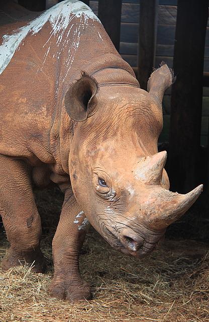1.1325773527.rhino