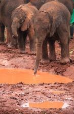 1.1325773527.sheldricks-elephants