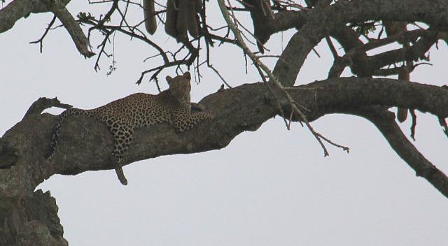 1.1325773735.cheetah