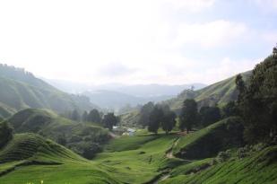 1.1368144000.malaysia-cameron-highlands
