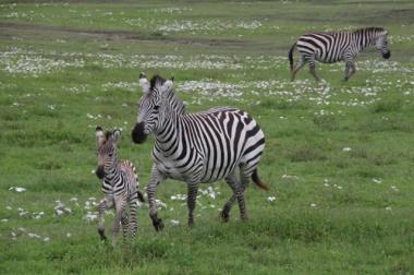 1.1368144000.tanzania-serengeti