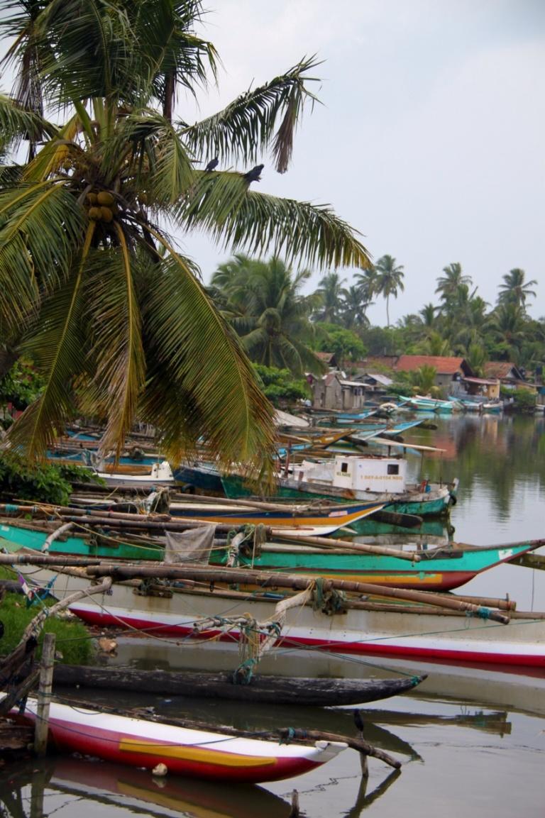 2.1383350400.mangroves