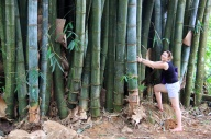 2.1383837621.huge-bamboo