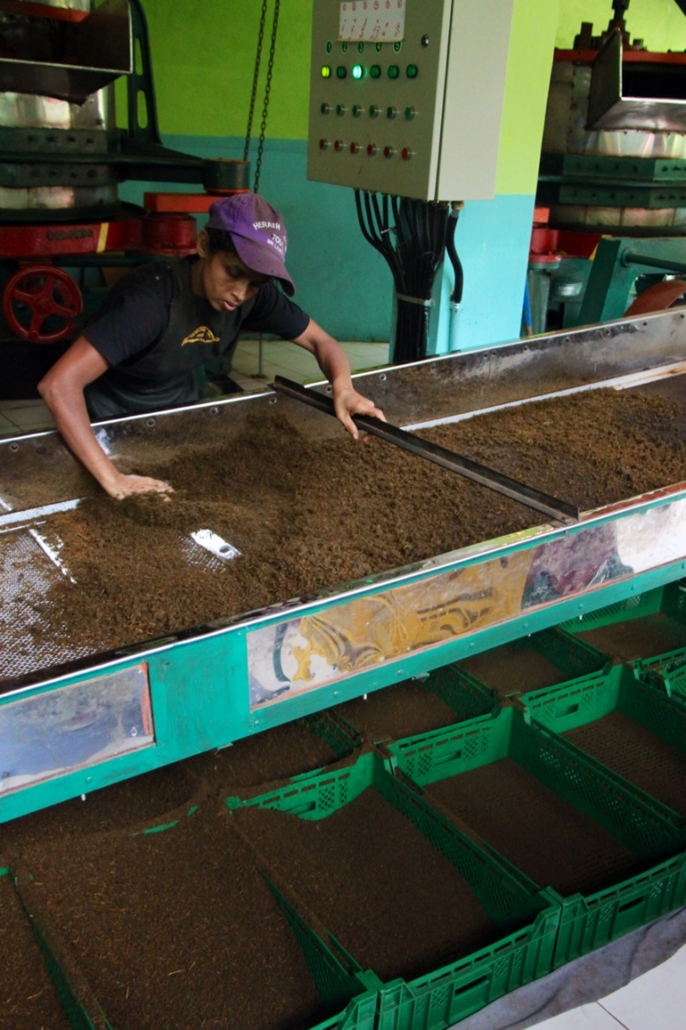 2.1383837621.tea-factory---sorting-grades-of-tea