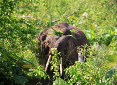 2.1384128000.tusky-elephant