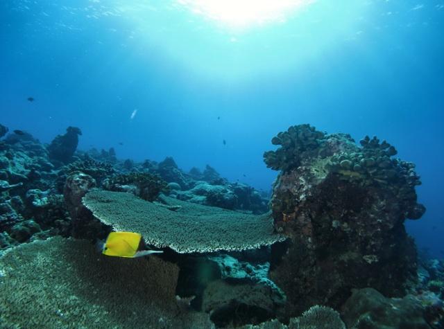 2.1384819200.reef
