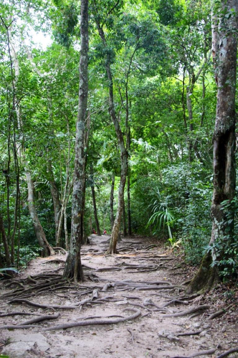 3.1397616579.the-rainforest
