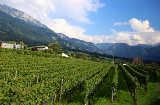 3.1409961600.vineyards