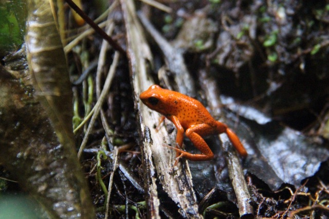 3.1415318722.1-red-frog