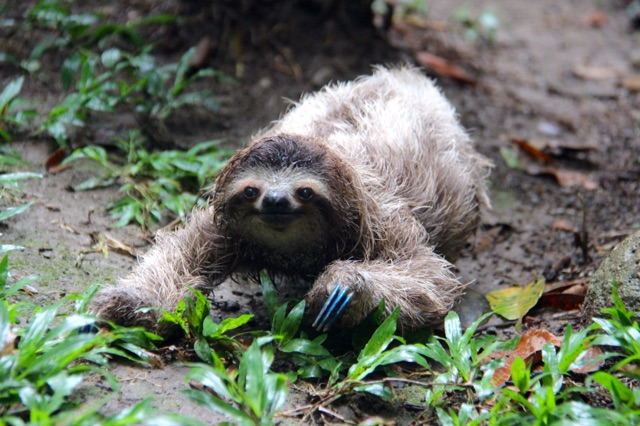 3.1415318722.baby-sloth