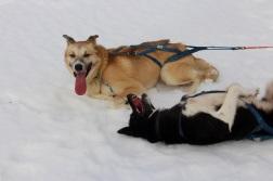 4.1426204800.lead-dogs
