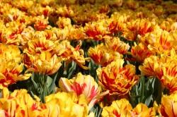 5.1458641580.fields-of-flowers