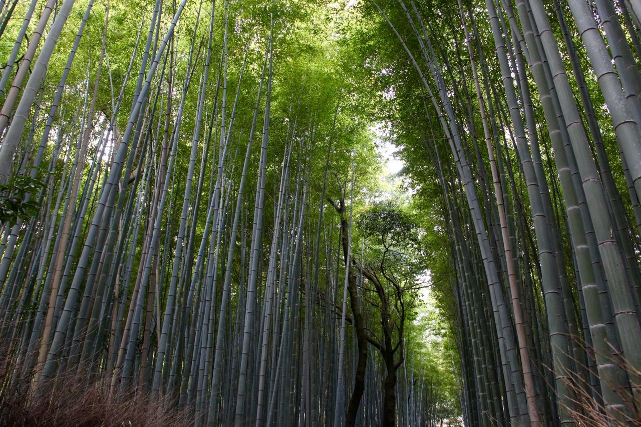 5.1459036334.bamboo-gardens