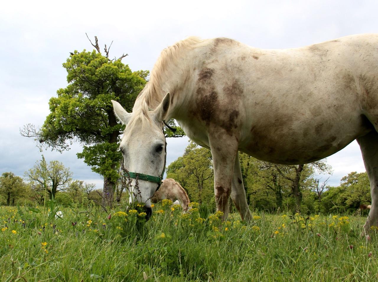 5.1462060800.white-horses