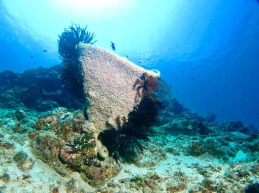 5.1478476800.perfect-reefs