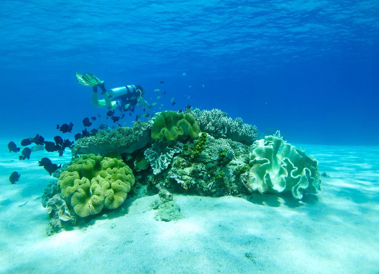 5.1478476800.reef