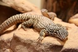 5.1478663095.lizard