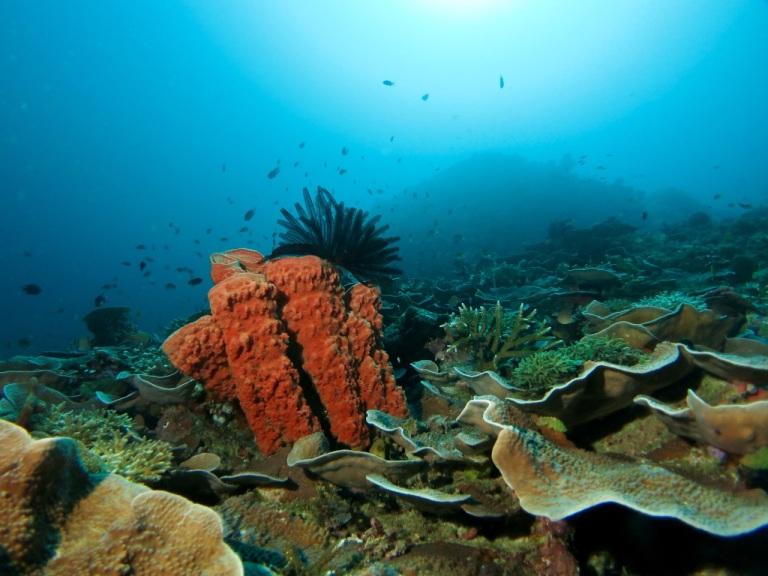 5.1478736000.1-reef