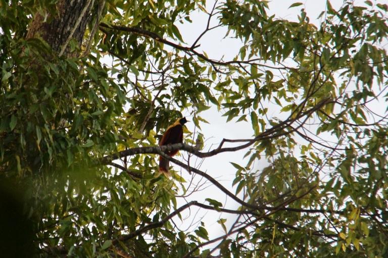 5.1478736000.red-bird-of-paradise