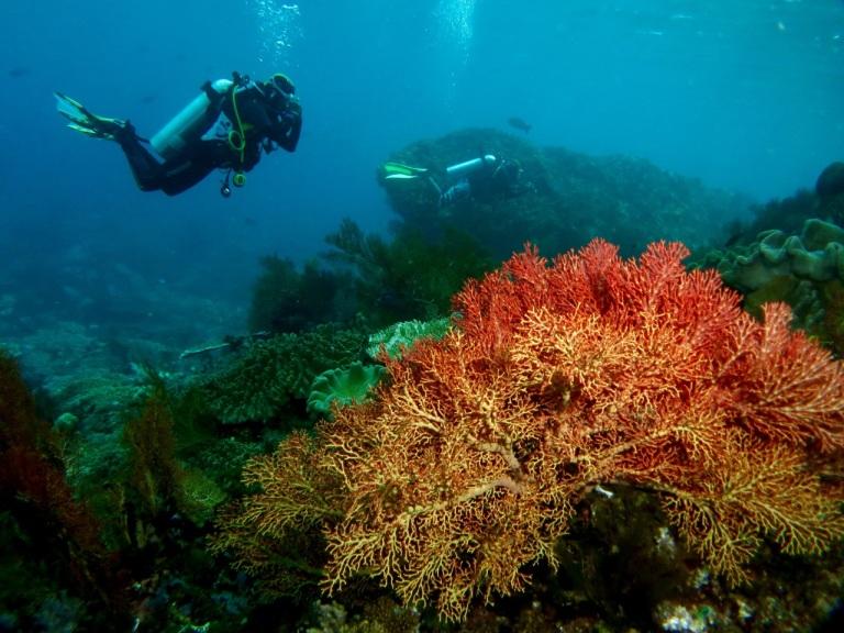 5.1478736000.reef