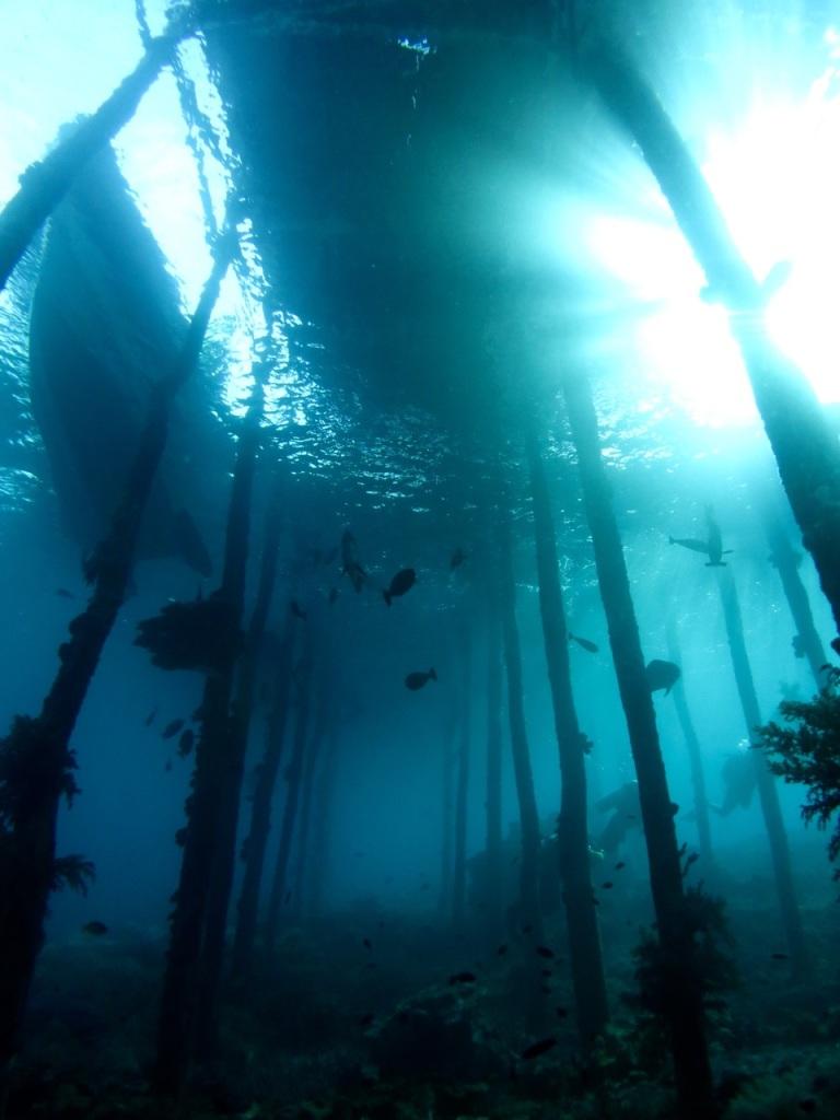 5.1478736000.under-jetty