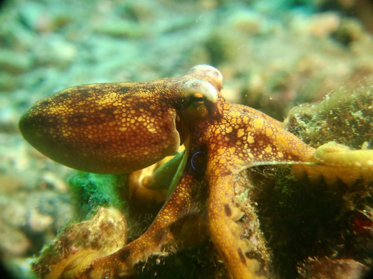 5.1479254400.mototi-octopus