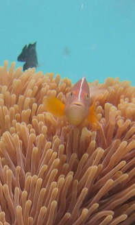 1.1325839678.anemone